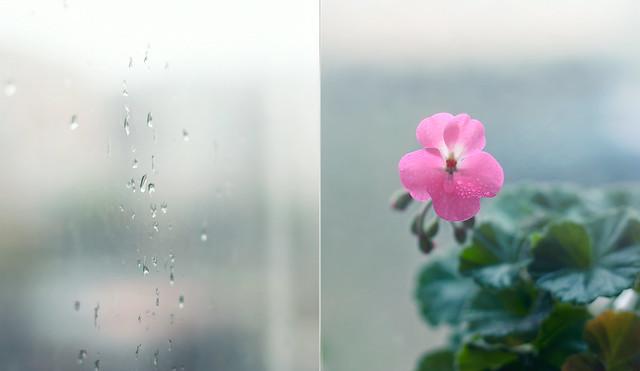 rain : 14/365