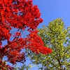 Red, blue, green #trees #colours #zurich #switzerland #spring