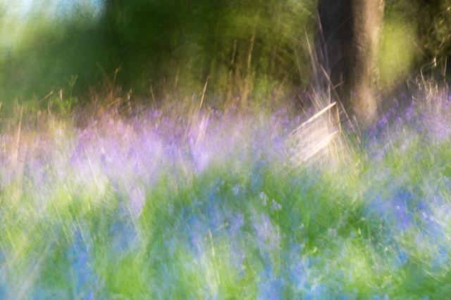 Spring in Scotland.....