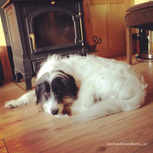 [Reunited] Sat, Mar 17th, 2012 Lost Male Dog - Garrandarragh, Mullinavat, Kilkenny