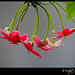 Hanging Beauties :) by Udipt's Imagery