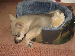 puppy Noggin