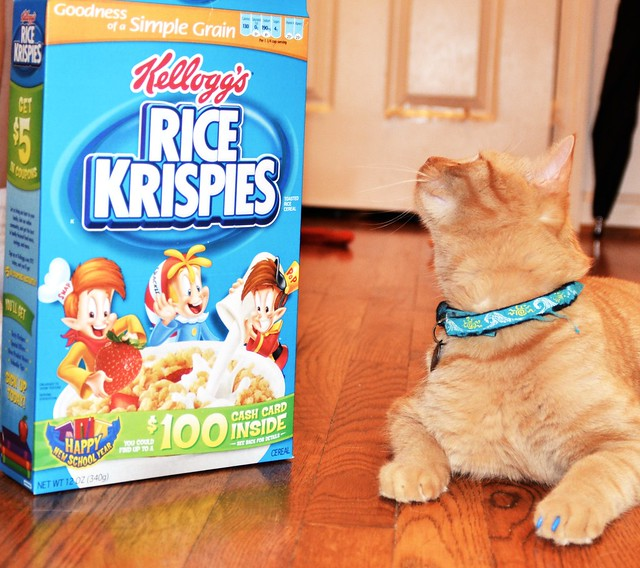 I Can Haz Cereal?