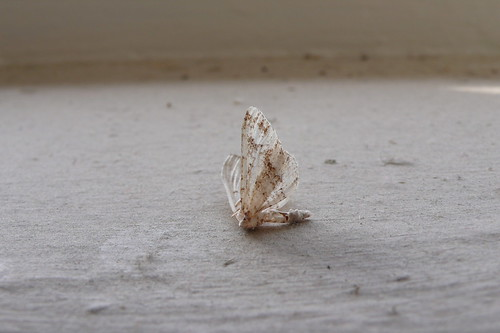 moth, the look see, dead, ®christina beaulac