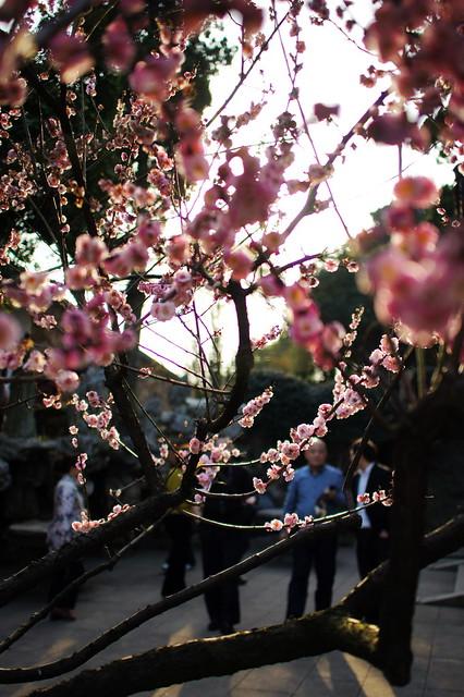 Meiyuan Gardens(Camera:Sony NEX-5 + Sonnar T* E 24mm F1.8 ZA)