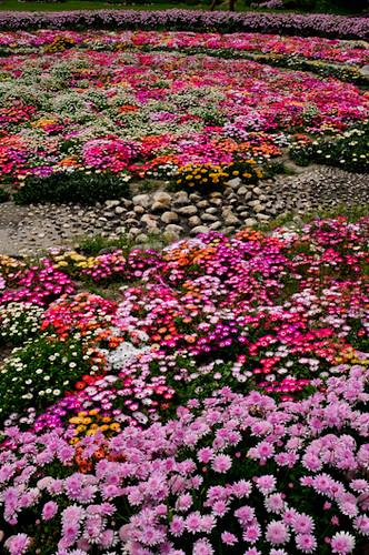 20120428-_DSC4647flowers