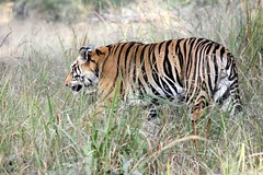 bandhavgarh national park tour