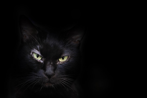 [フリー画像素材] 動物 1, 猫・ネコ ID:201206111000