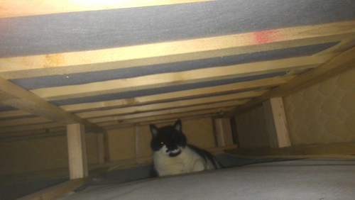 Fred likes to hang out in my bed's box spring now by christopher575