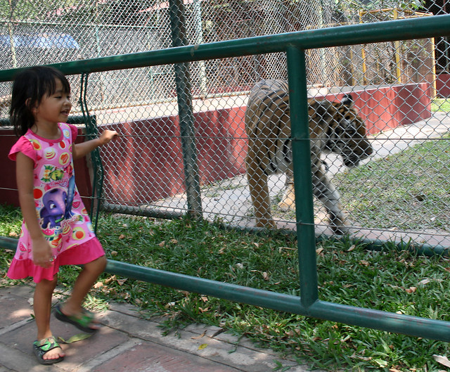 Nong Ja and a Tiger