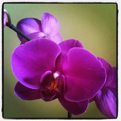 My beautiful Mothers day Orchid #flowers from my hubs #nature