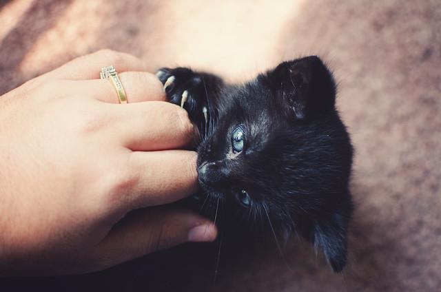 Luna: nomming