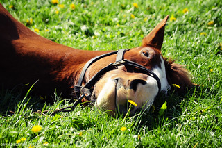 sleepy horse 03