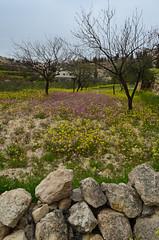 Bustan Qaraaqa農場風光