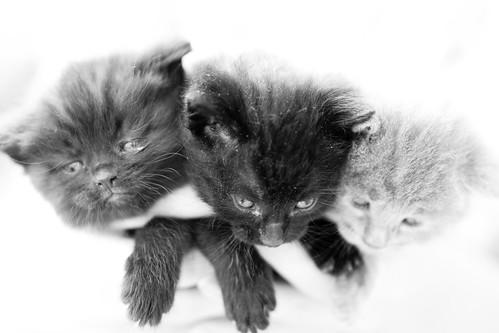 Three headed dragon-cat by dusan.smolnikar