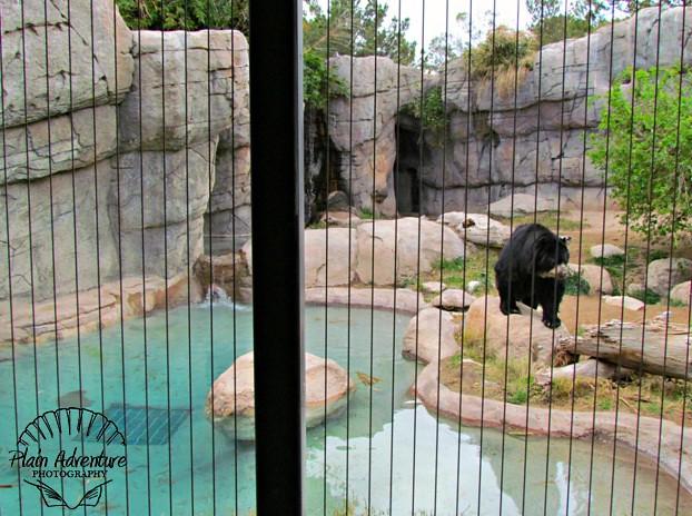Andean Bear Exhibit Reid Park Zoo