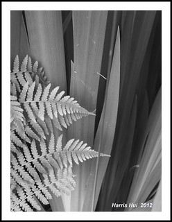 You Need True Black and True White in B&W Composition - Ferns X0963e