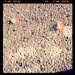 Pretty fallen flowers