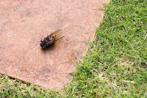 要加油哦, 不要像這蟬般那樣倒下呢