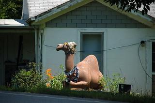 Misplaced Camel