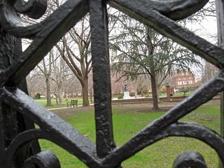 Trees Through Wrought Iron