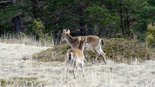 2014-3229 Wild bei Mosquerela