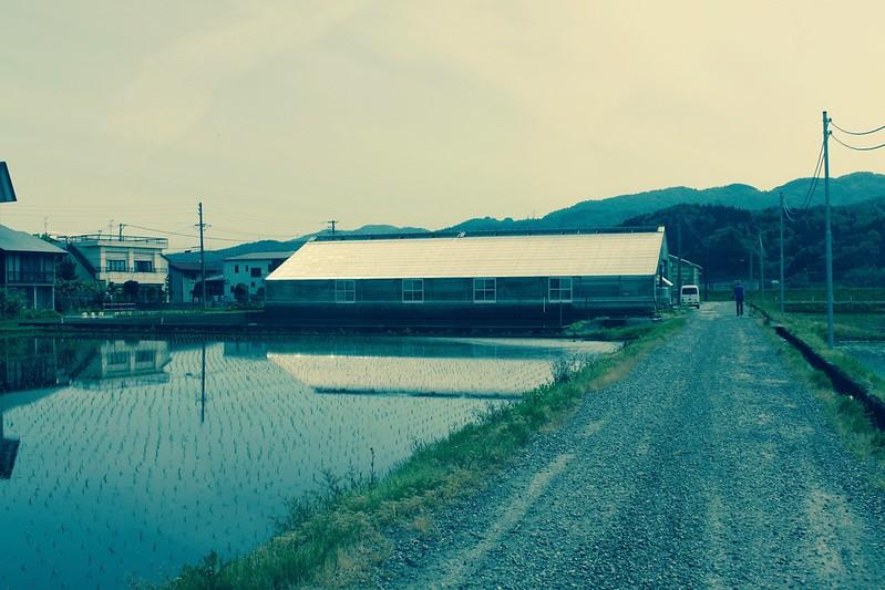 Leo loopt het pad af naar het Tosai Koihuis van Dainichi