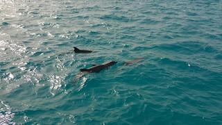 Hurghada 5-5-2016