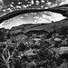 Landscape Arch by Marcela McGreal
