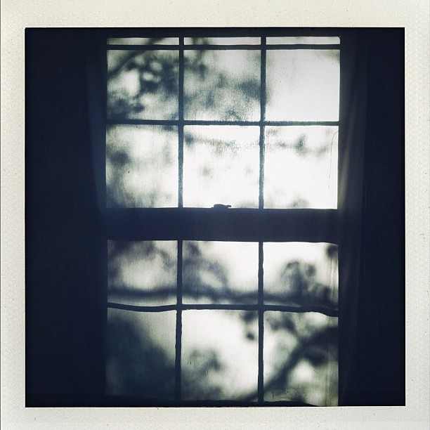 gosh I love a window #shadow #photoadayapril