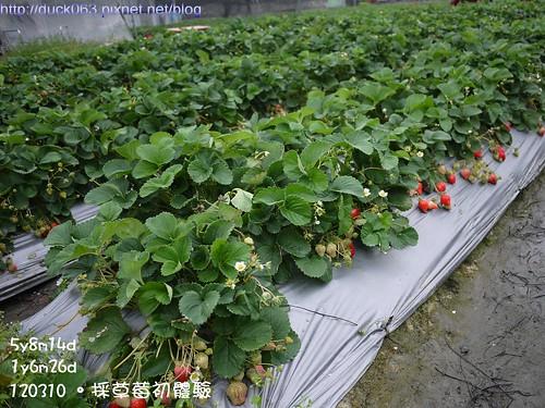 P1180107莓