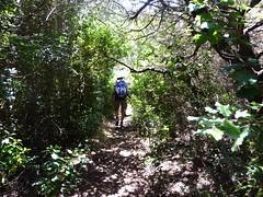 Le sentier de montée à Ciappili