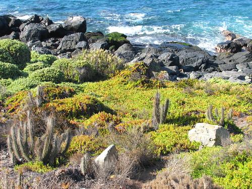 Vegetación costera