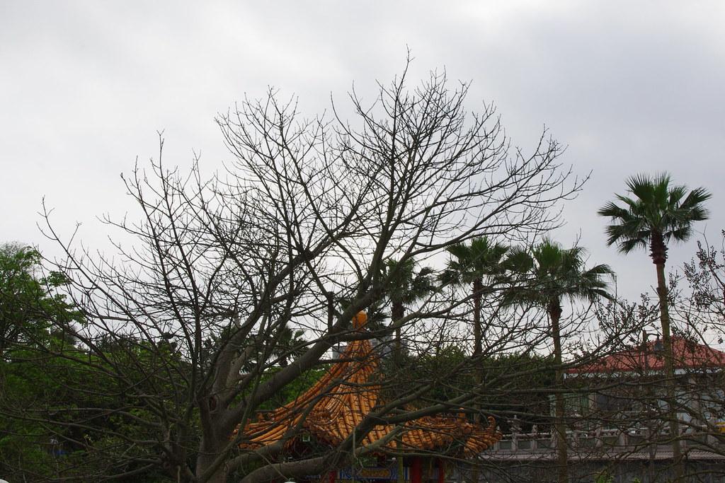 林口-竹林寺隨拍