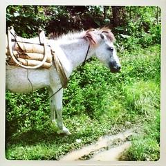 weel 18, 2012: horse