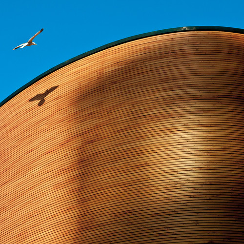 city shadow bird church helsinki pigeon chapel kamppi