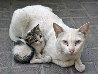 Cat and kitten in Dubai.