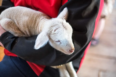 Baby Animals at Hancock Shaker Village - Pittsfield, MA - 2012, Apr - 04.jpg by sebastien.barre