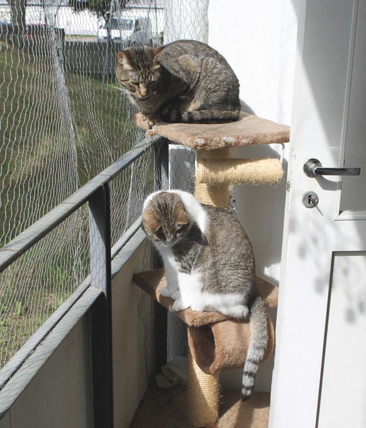kissatpihalla
