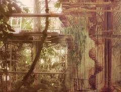Present and Past - Restauration Palm House Vienna - Diptych a Photography and a Watercolour - Palmenhaus Schönbrunn Wien 2012 and 1986 - 1990 Foto 2012 Aquarell von Günter Fritsch 1986 - 1990