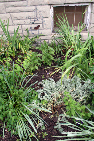 perennial bed renovation