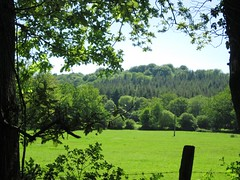 View in Verdley Wood 1