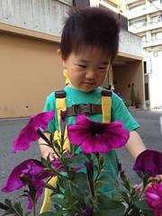 とらちゃんとお花 (2012/5/27)