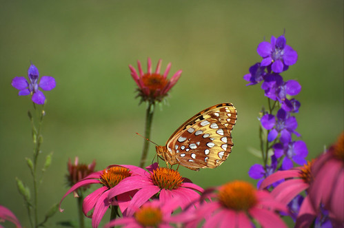 Butterfly - explored by † David Gunter