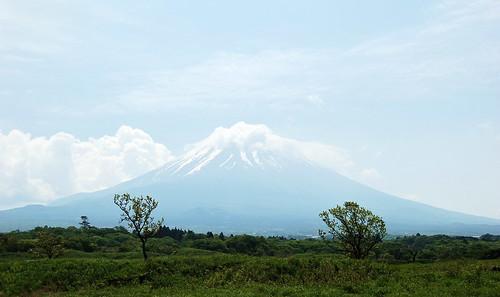 ★新緑★富士山の麓から・・・