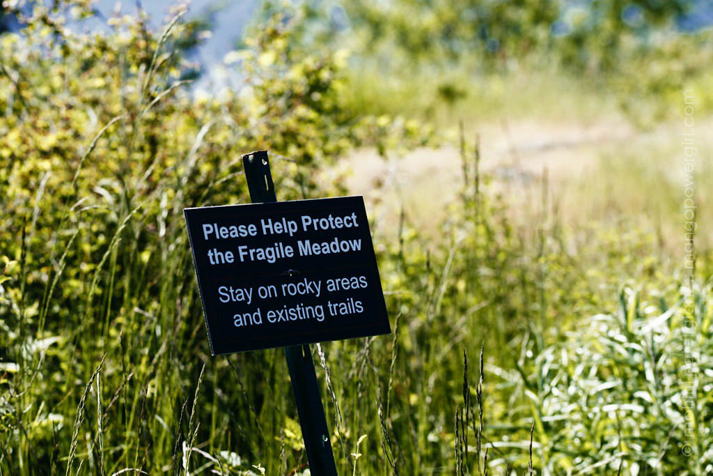 protect the meadow on guemes montain