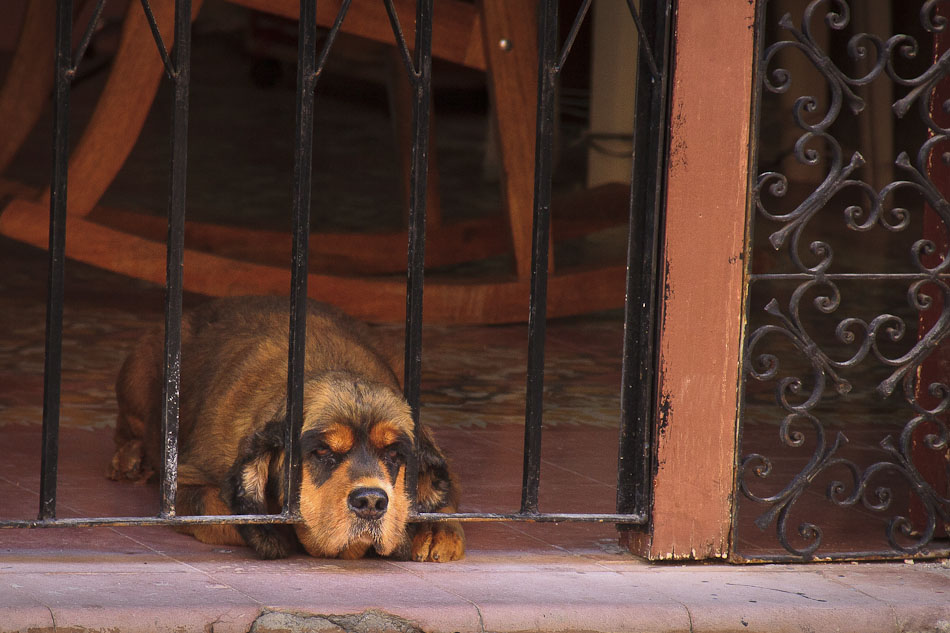 Photo of the Week: A Dog's Life in Campeche, Mexico