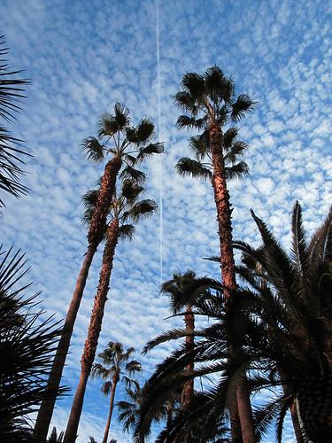 Palm trees. by BuzzFarmers
