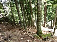 Dans la descente du versant W : en sous-bois pourris par les tempêtes d'hiver