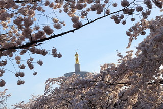 Gold Man: Cherry Blossoms at The Oregon State Capital